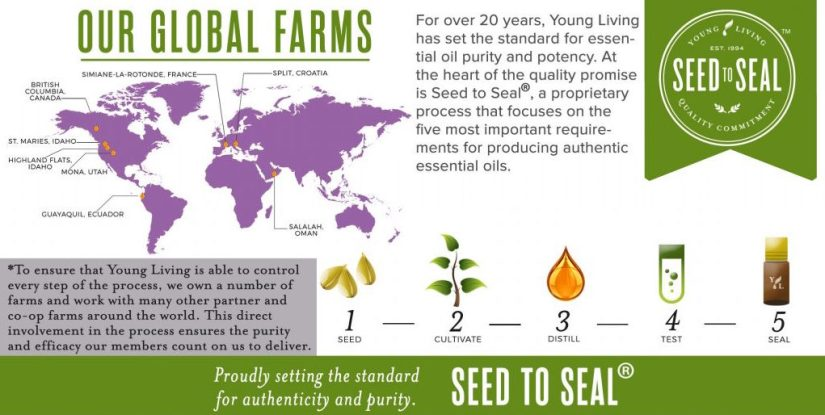 2a-Seed-to-Seal-1024x576.jpg